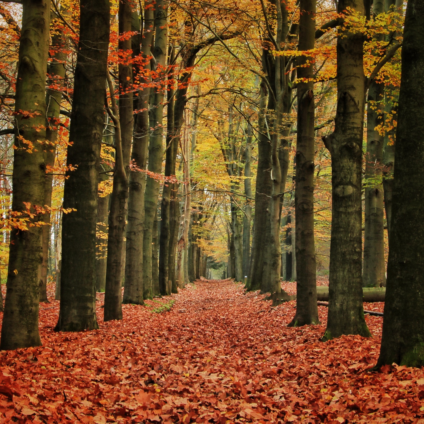 Photograph Forrest path by Joost Lagerweij on 500px