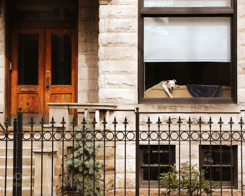 Photograph Bungalow puppy by Glenn Nagel on 500px