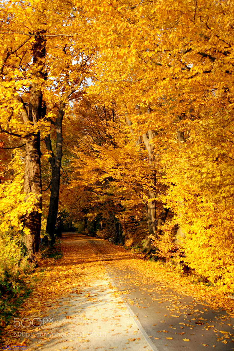 Photograph Golden leaves by Ulrich R. Sieber on 500px