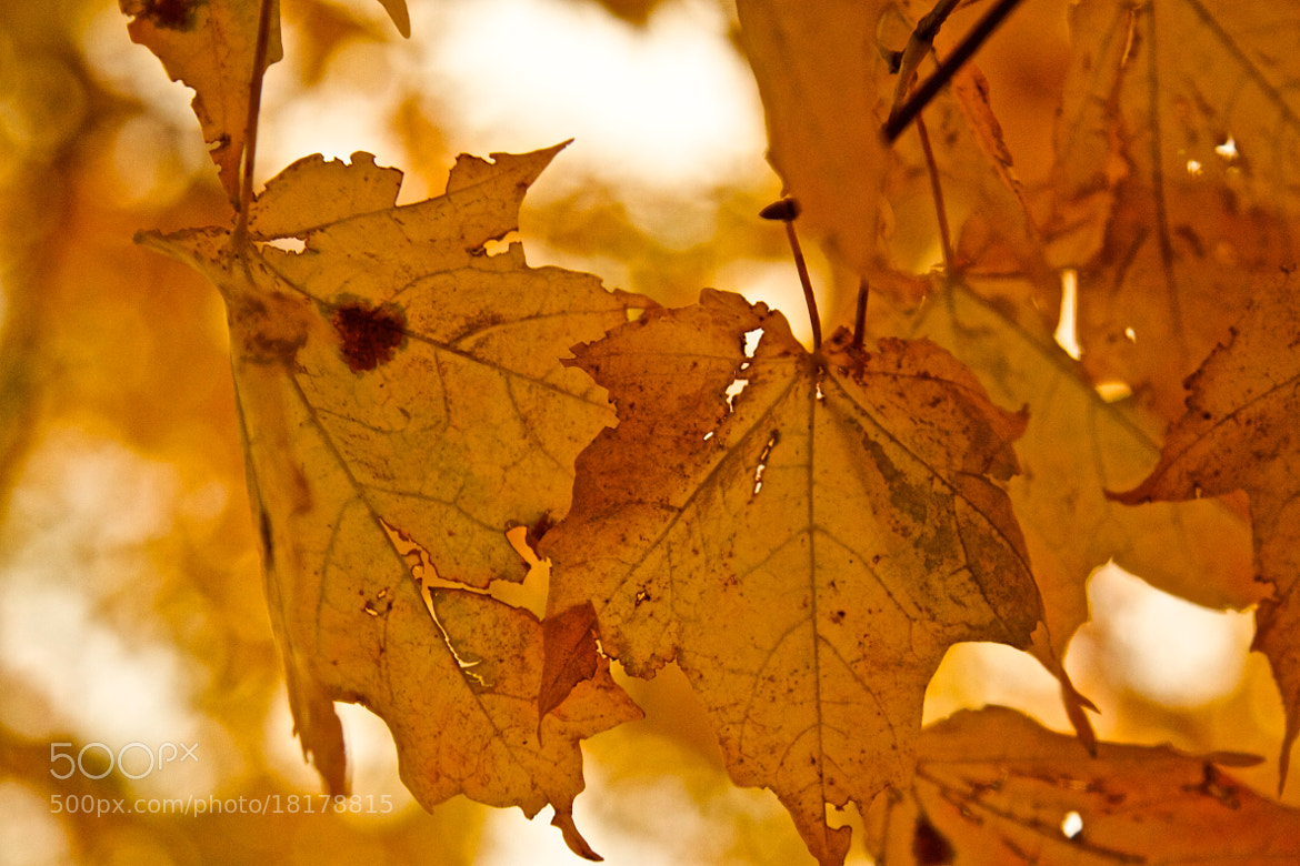Photograph Autumn by Jen Dobberstein on 500px