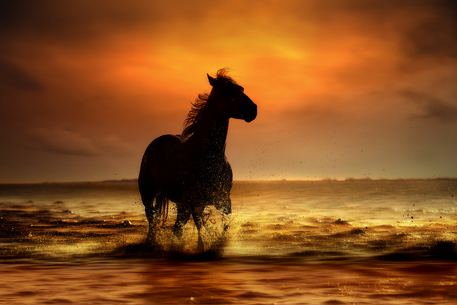 galloping in freedom by nikos Bantouvakis on 500px.com