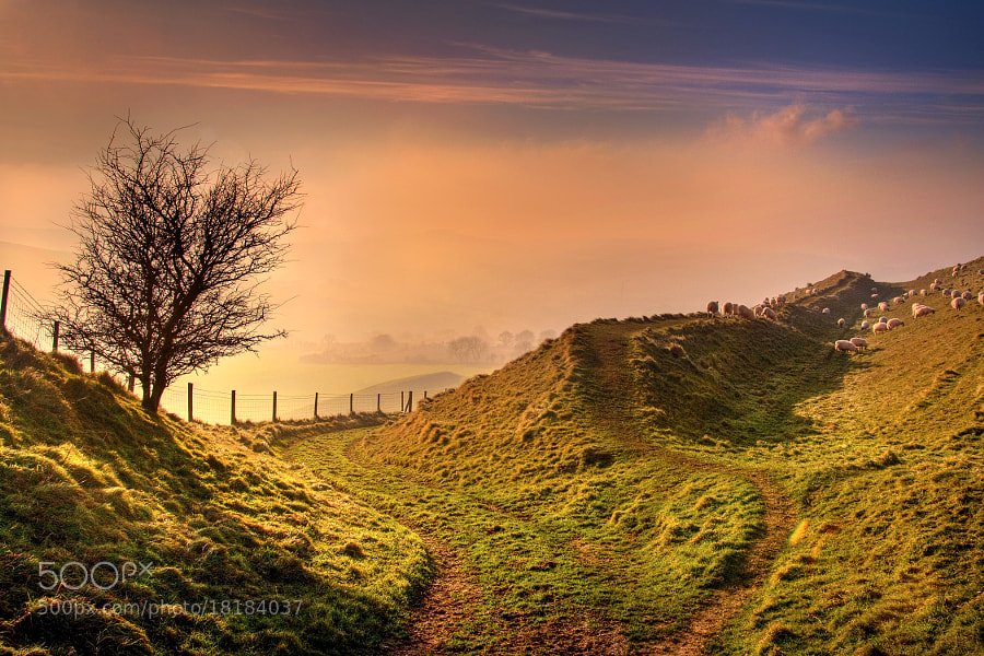 Photograph Fork and sheep, Eggardon Hill, Beaminster by Chris Spracklen on 500px