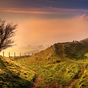 Fork and sheep, Eggardon Hill, Beaminster by Chris Spracklen (chrisspracklen)) on 500px.com