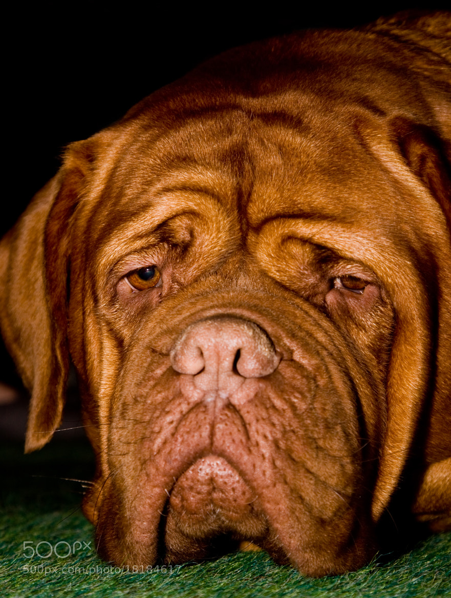 Photograph Dog Days by Paul Allen on 500px