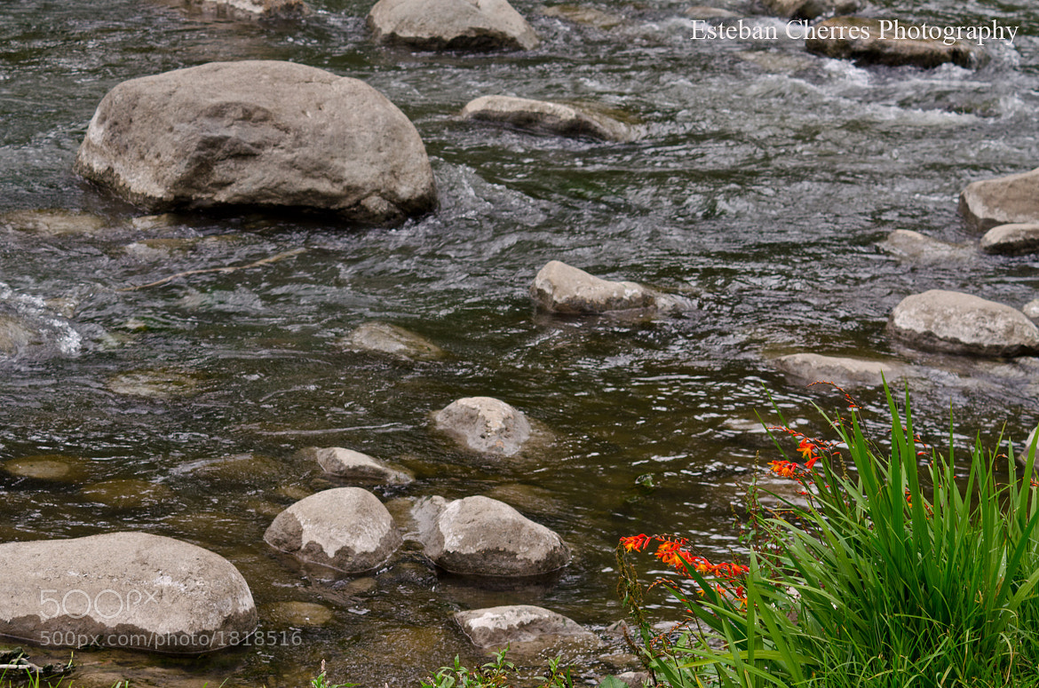Photograph Flowers by the river by Esteban Cherres on 500px