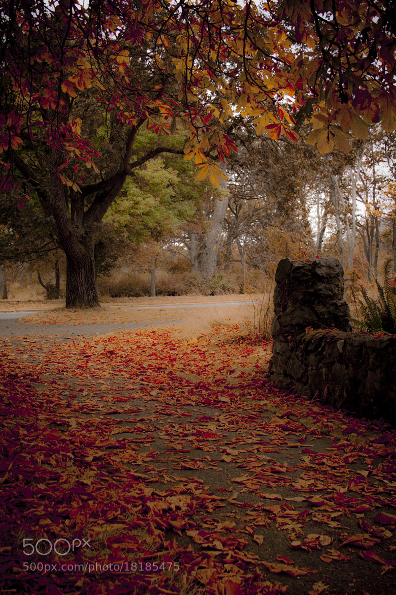 Photograph Beautifully Messy Autumn by Andrew Cameron on 500px