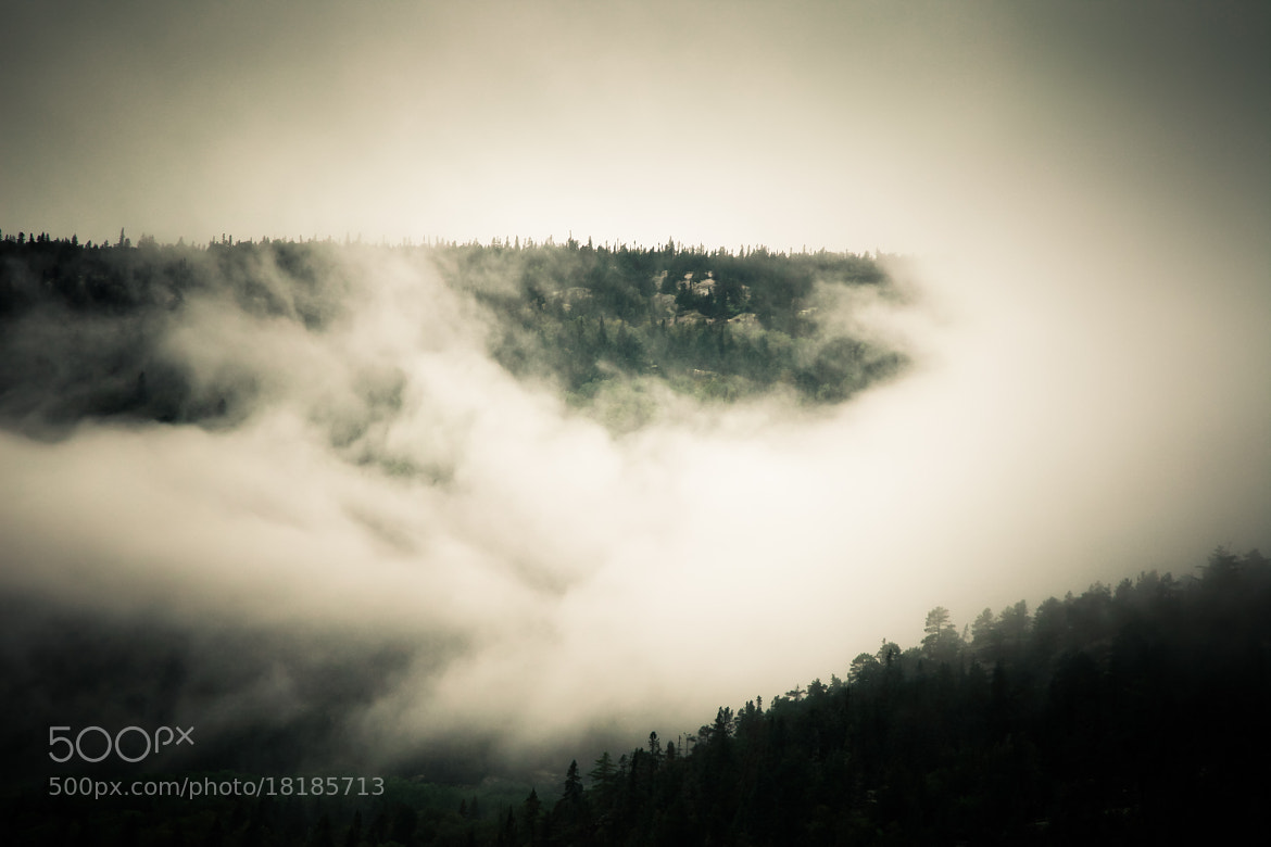 Photograph Fog by Marie-Catherine O'Malley on 500px