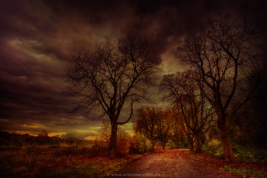 Forgotten avenue