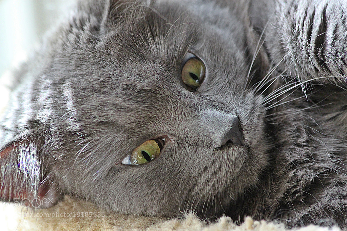 Photograph there is trouble in those EYES! by michelle phenix on 500px