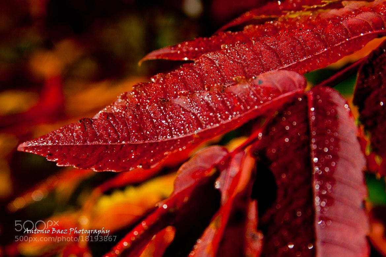 Photograph Autumn Leaves by Antonio Baez on 500px