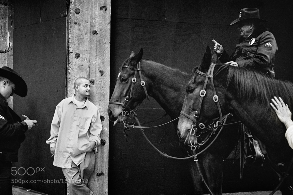 Photograph Horseplay by Dana Barsuhn on 500px