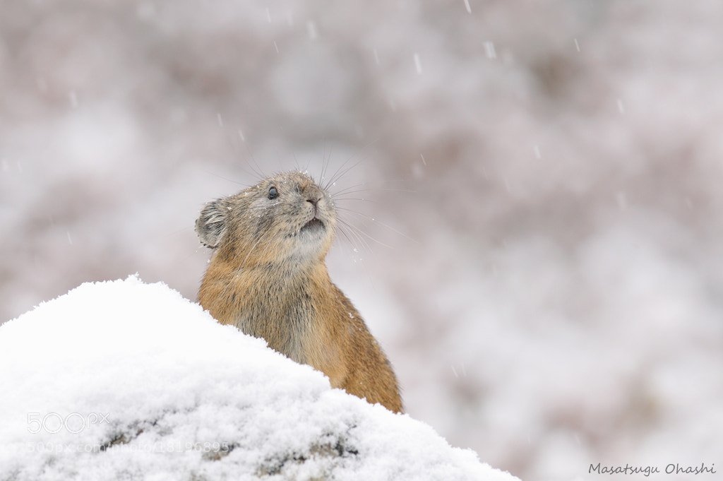 Photograph Lingering Snow by Masatsugu Ohashi on 500px