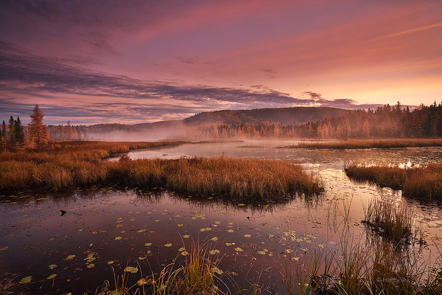 Photograph Opeongo's Golden Morning by Henry Liu on 500px