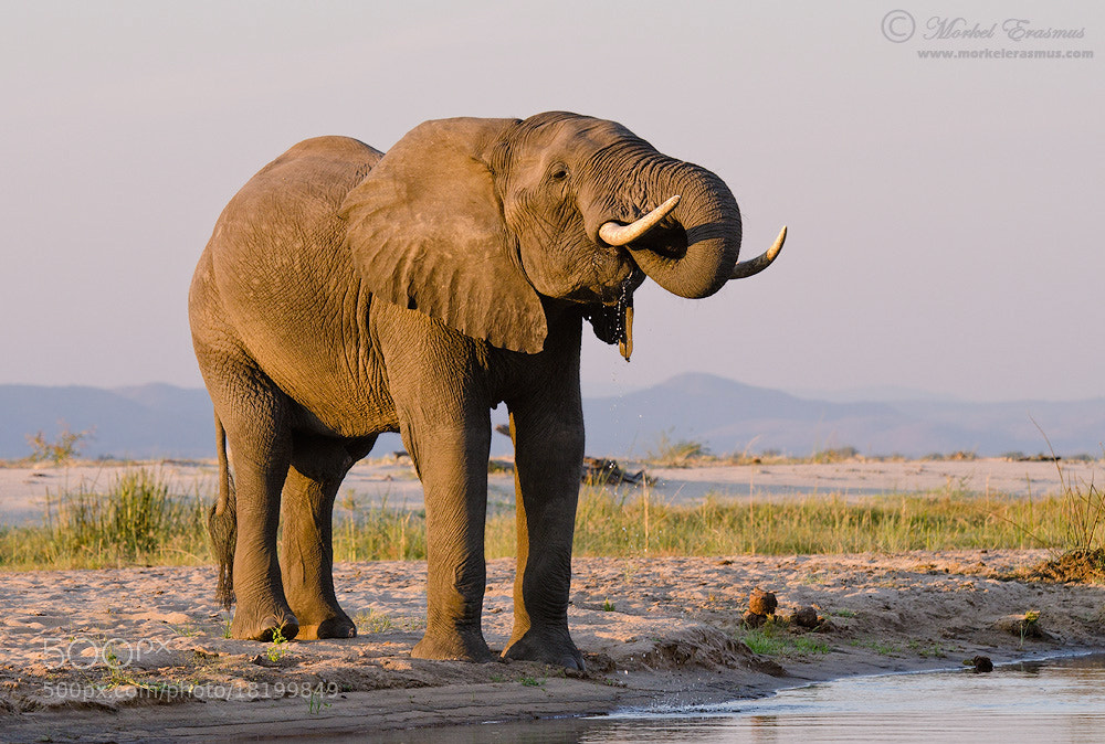 Photograph Quenched Thirst by Morkel Erasmus on 500px