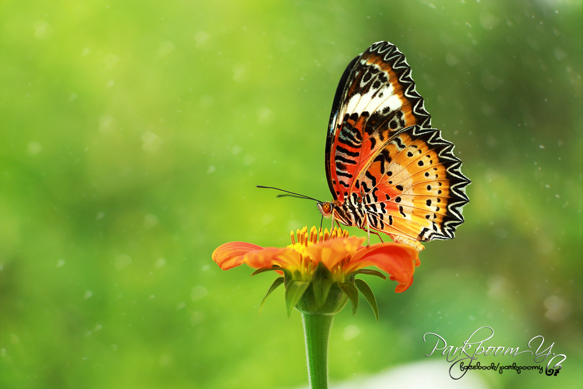Photograph Butterfly heart by Pärkpòóm Ÿeesòóntes on 500px