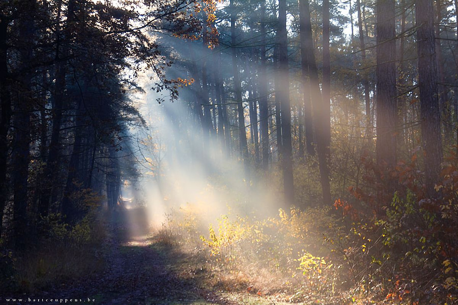Photograph heavenly autumn 7 by Bart Ceuppens on 500px
