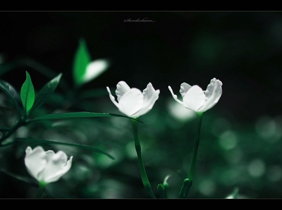 Photograph white magic by Sandesh nk on 500px