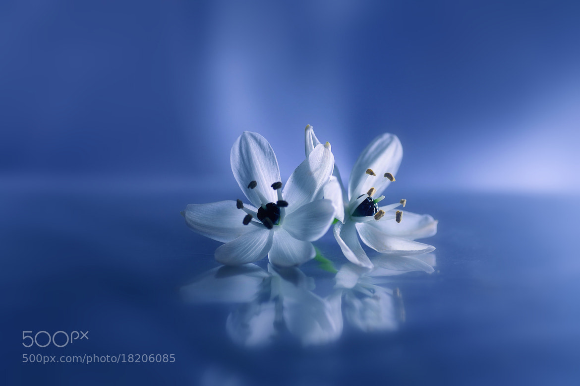 Photograph Toi et moi by Lafugue Logos on 500px