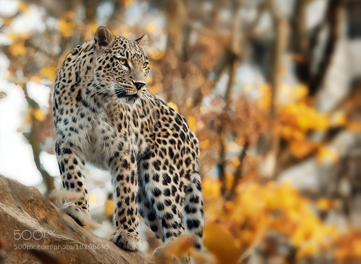Photograph overview by Sonja Probst on 500px