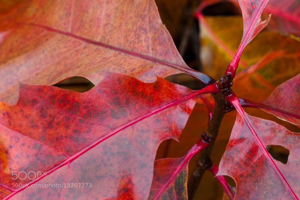 Photograph Autumn colors by Rob Janné on 500px
