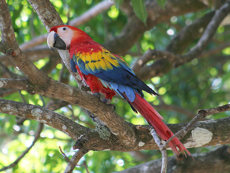 Photograph Scarlet Macaw by Aat Bender on 500px