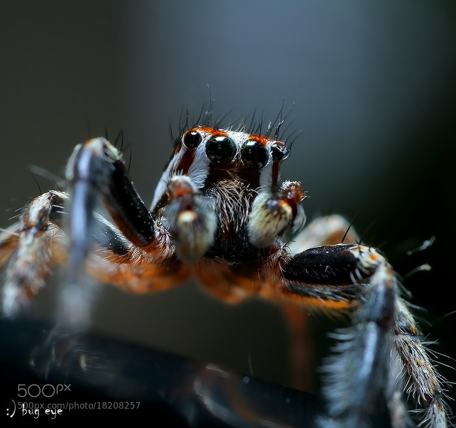 Photograph will jumpppppp...p.p..p...p..... by bug eye :) on 500px