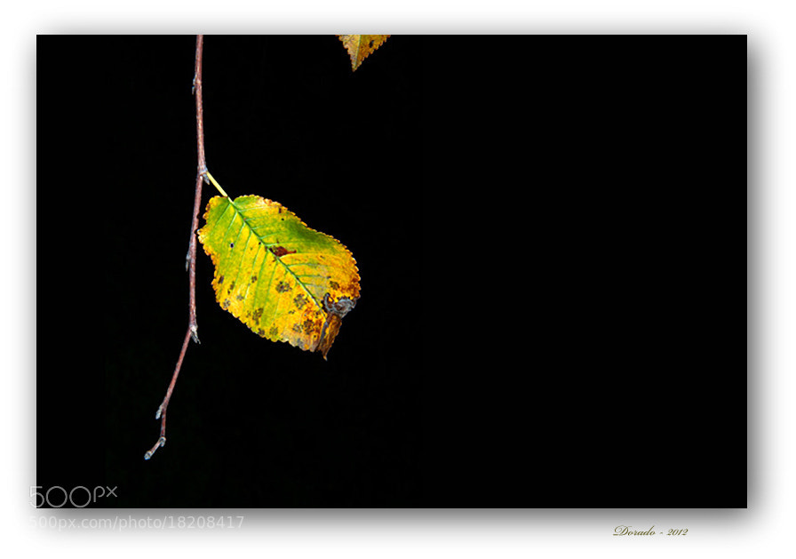 Photograph Autumn magic XLVI by Juan Dorado on 500px