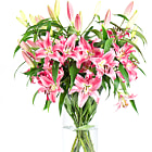 bouquet of fresh lily flowers on white background