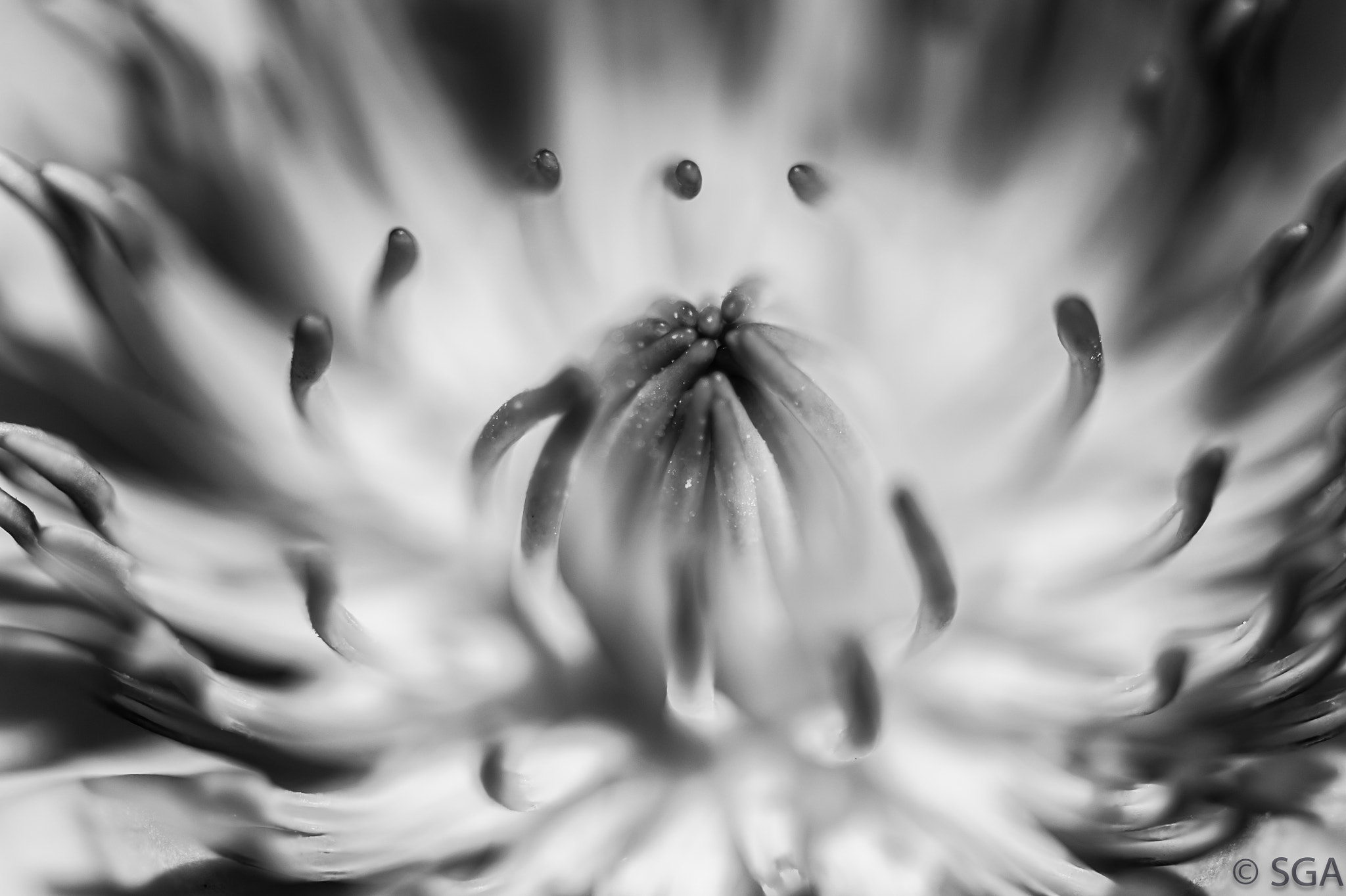 Photograph open to ideas by Santiago  on 500px