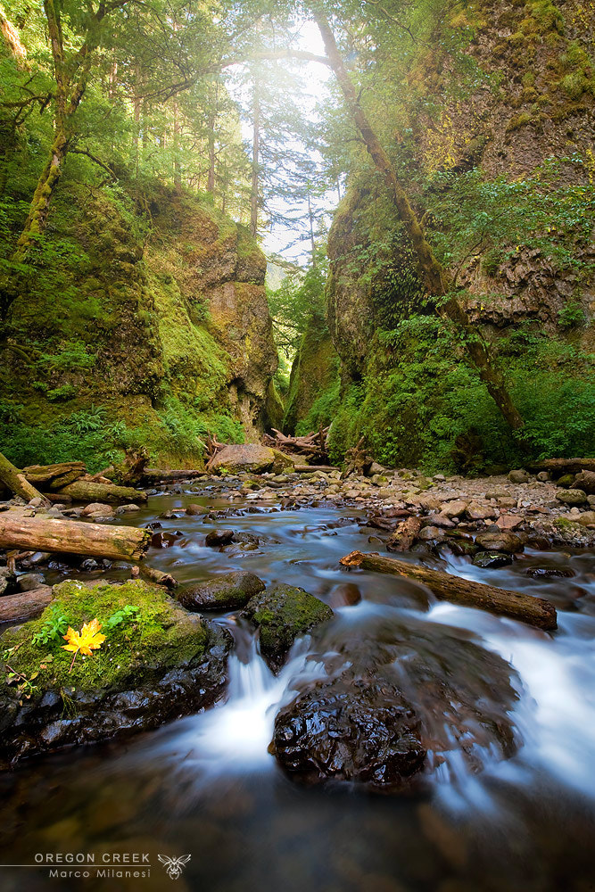Photograph Oregon creek by Marco Milanesi on 500px