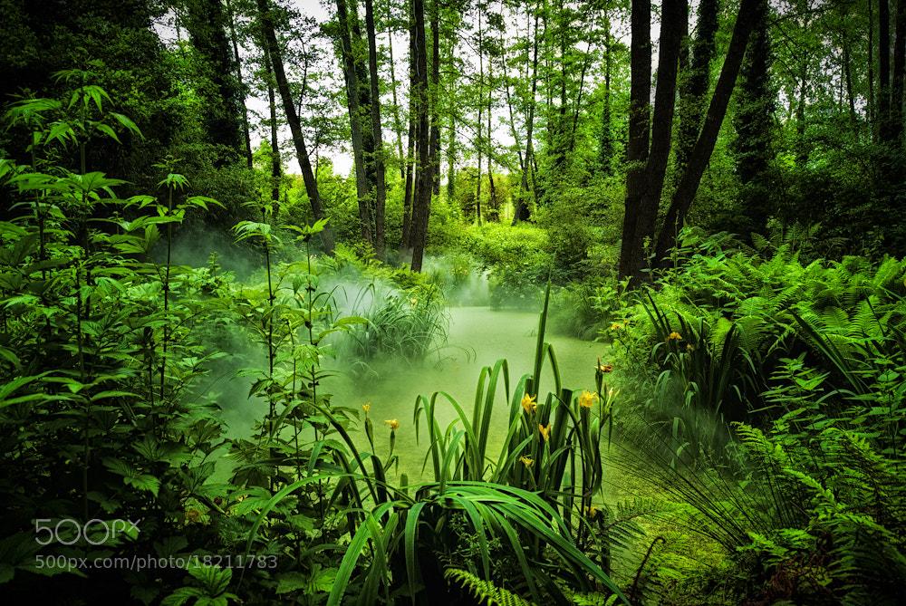 Photograph Jungle Fever by Allard Schager on 500px