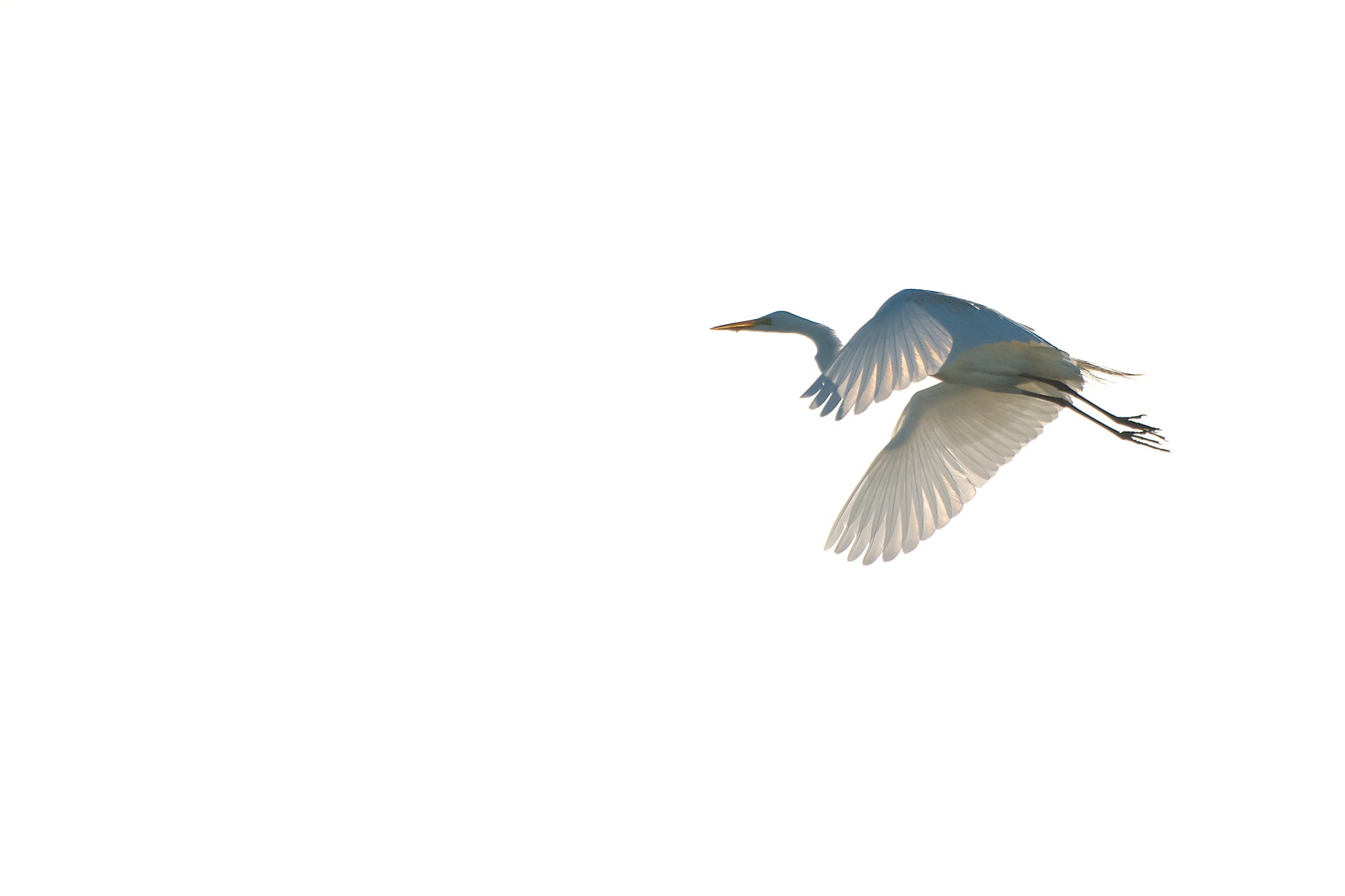 Photograph Egret by Remco Douma on 500px