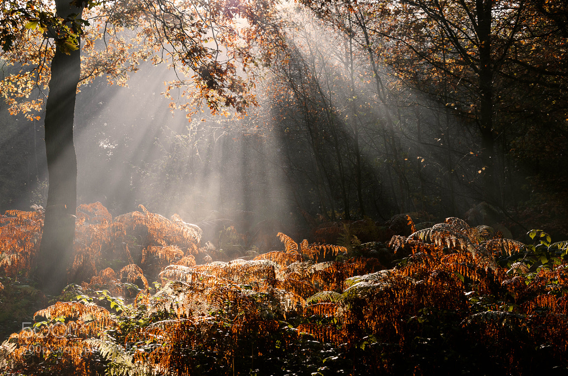 Photograph Ferns and Rays by Pawel Niktos on 500px