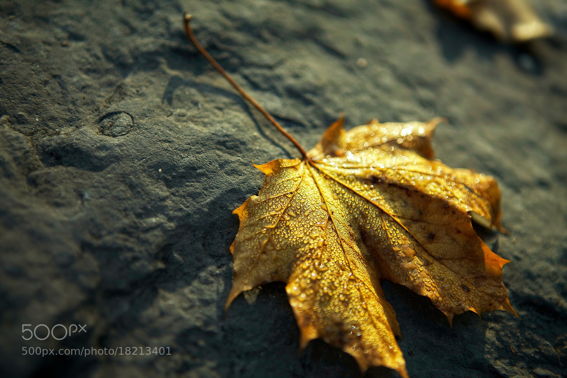 Photograph fall dew by Jean-Pierre Perren on 500px