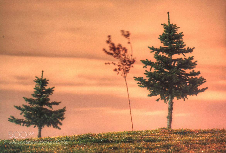 Photograph Alone by Ferhan Mazllami on 500px