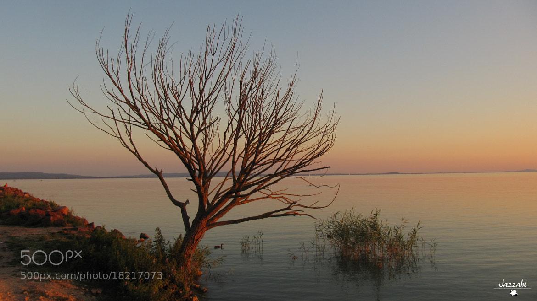 Photograph Solitude by Szabolcs Sélley on 500px