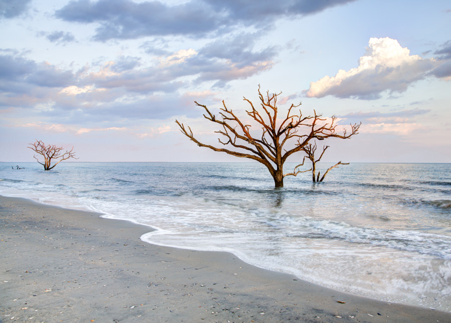 Photograph Botany Bay Beach by John Werry on 500px