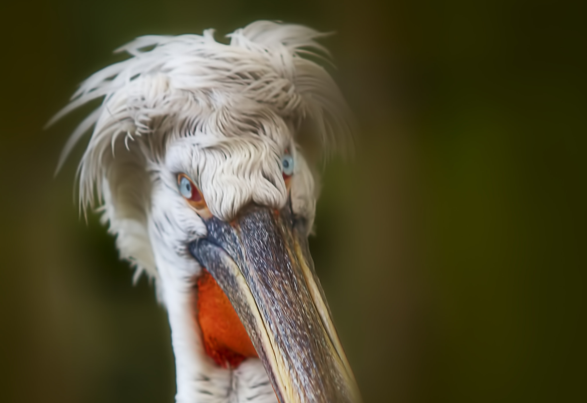 Photograph Morning Hairdo by Wim Bolsens on 500px