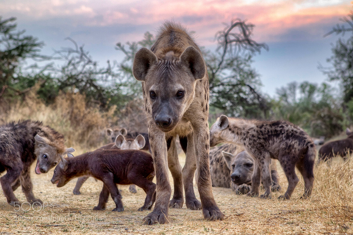 Photograph Hyena Clan by Deon De Villiers on 500px