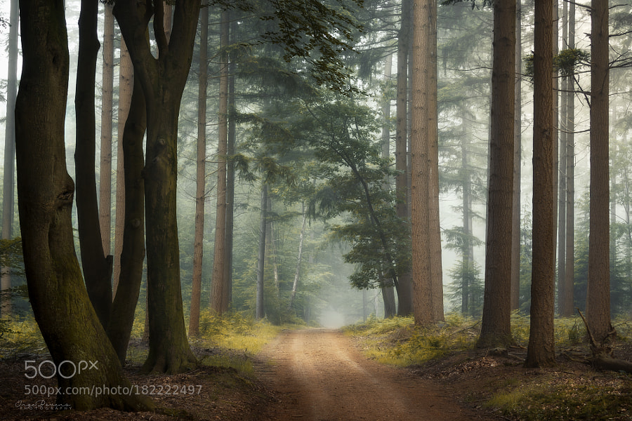 Enchanted. by IngeBovens
