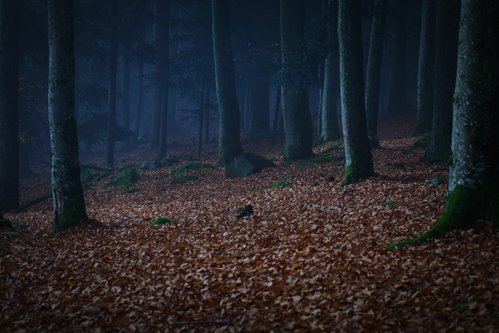 Photograph silence by Martin Waldbauer on 500px