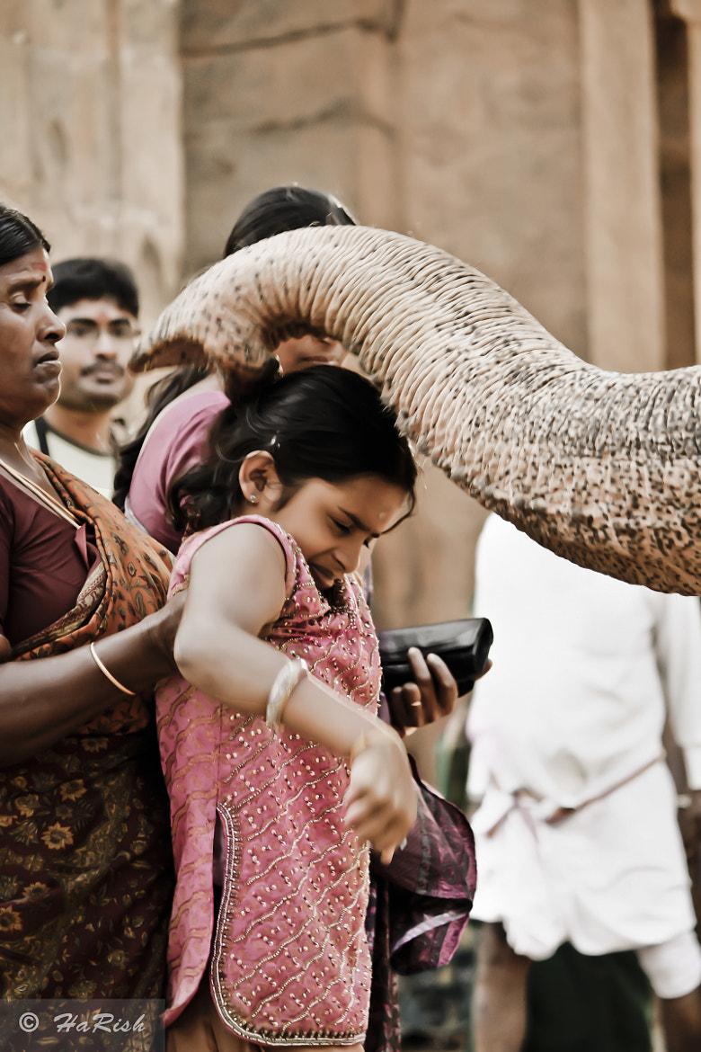 Photograph Elephant Blessing by Harish  Kumar on 500px