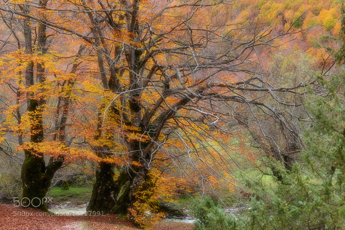 Photograph Magical forest by Paolo Bovo on 500px