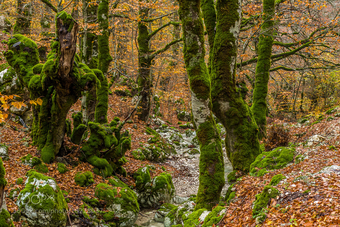 Photograph Forest by Paolo Bovo on 500px