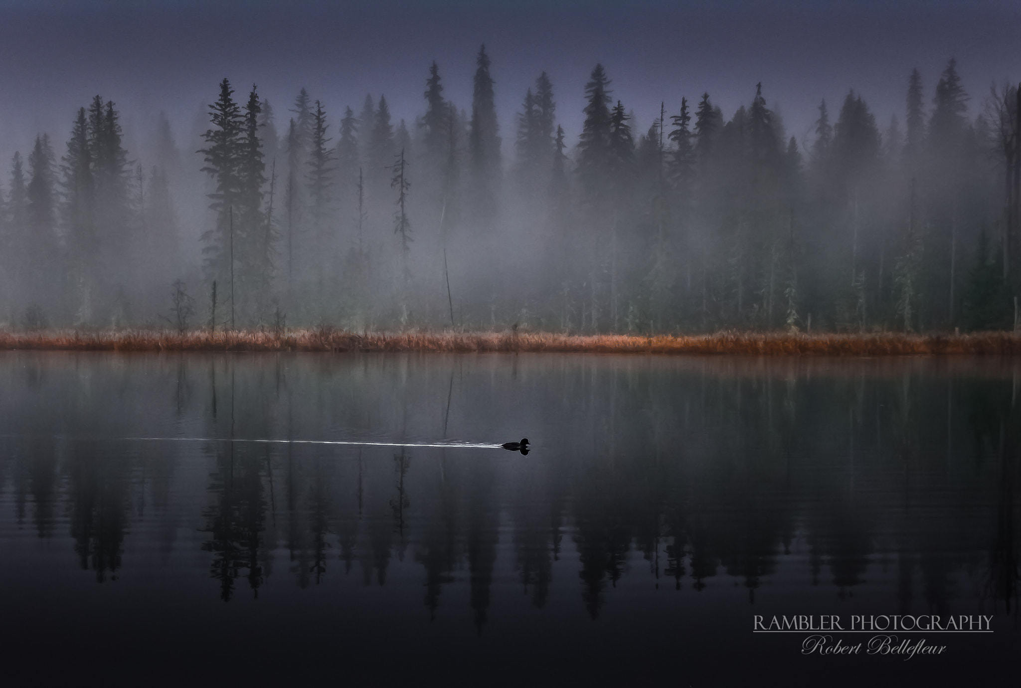 Photograph Alone in the Fog by Robert Bellefleur on 500px