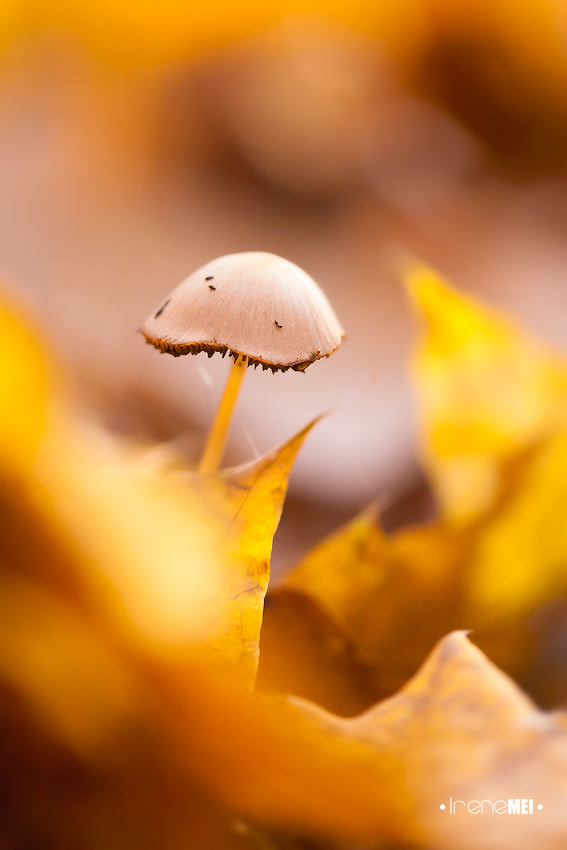 Photograph Scent of Autumn by Irene Mei on 500px
