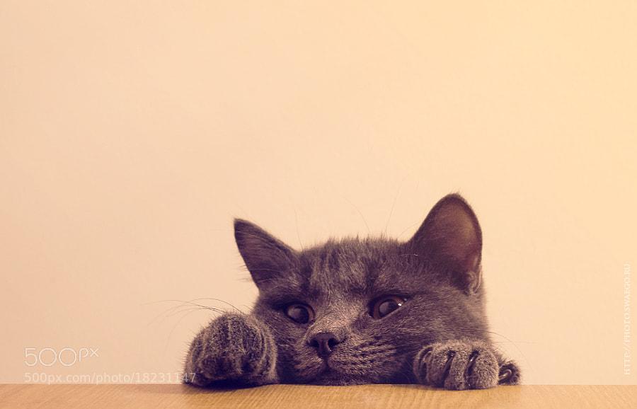 Cat by Tolik Maltsev on 500px.com