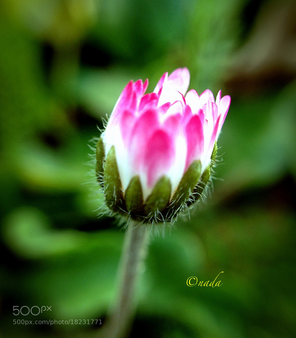 Photograph Flower by Nada Leva on 500px