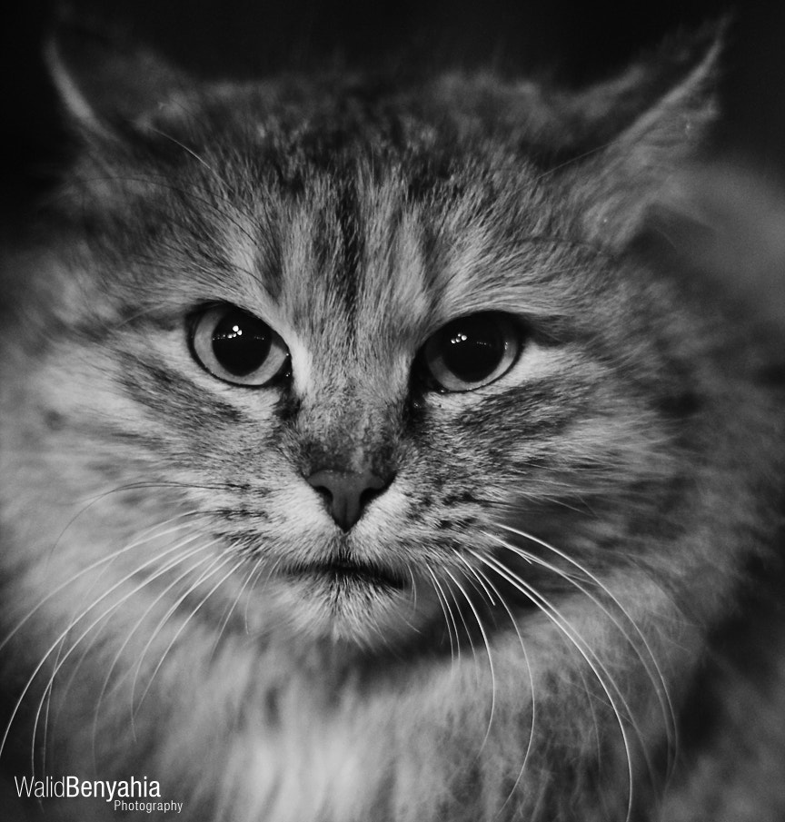 Photograph Cat by Walid Benyahia on 500px