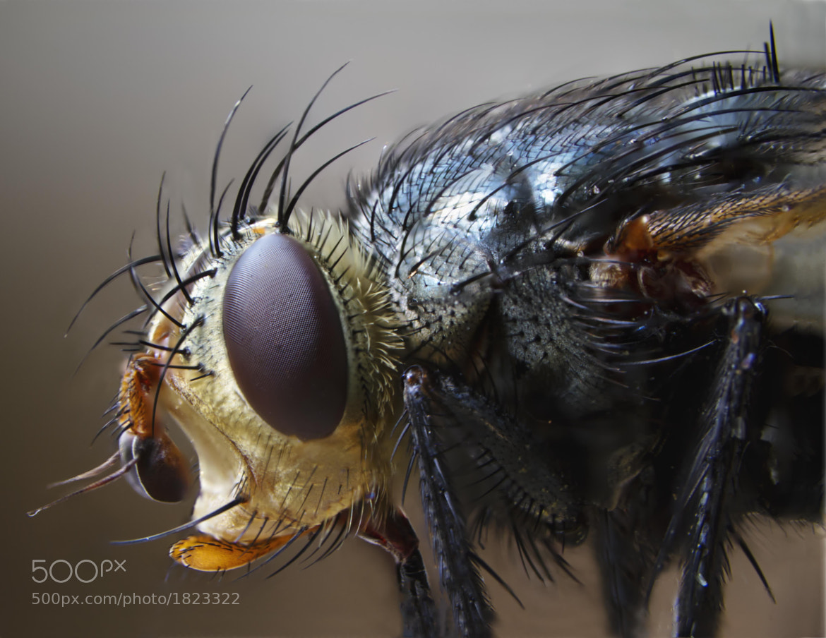 Photograph Fly Profile by Matt H on 500px